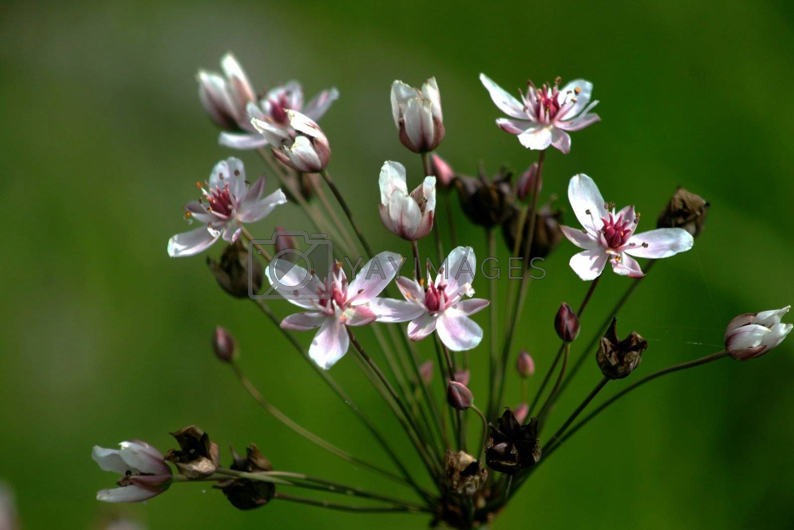 Wild flowers in early morning