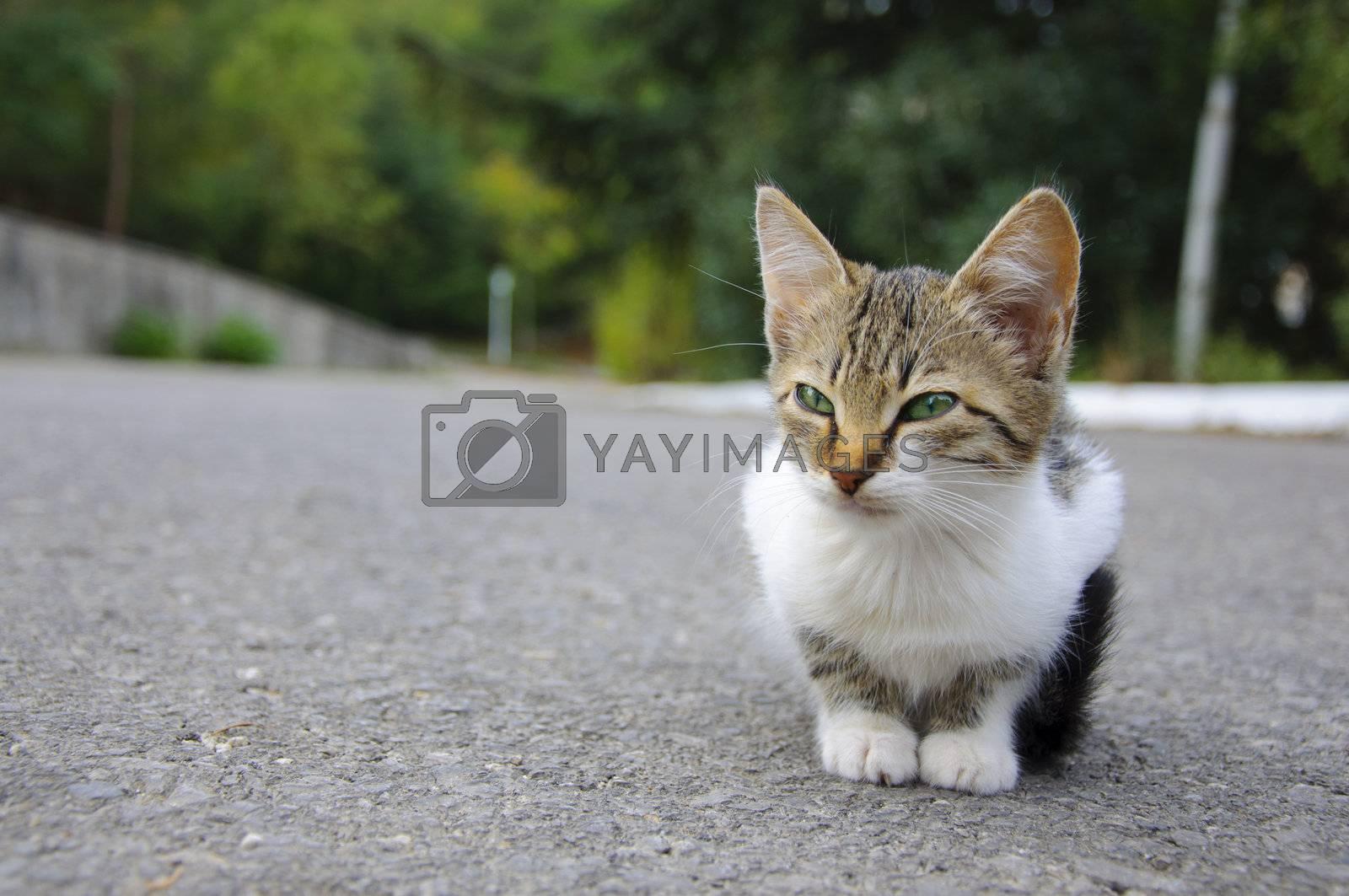 Stray kitten sitting on the ground, it looks sad