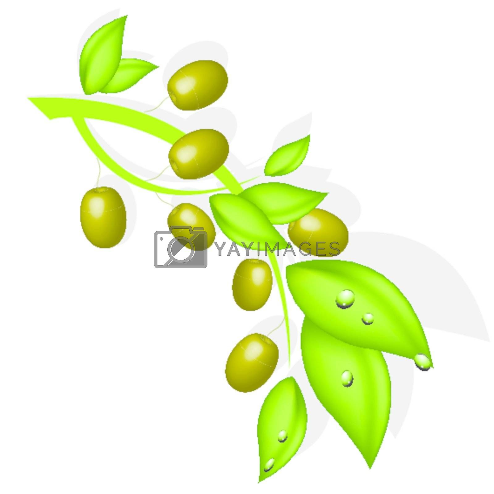illustration, branch with olive on white background