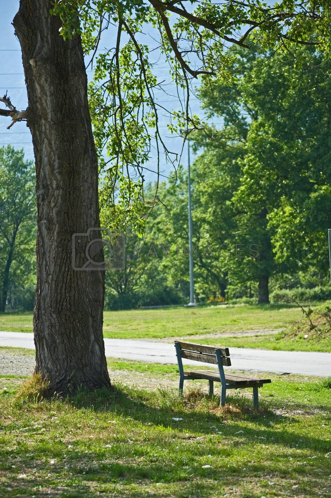 Lonely bench underneath tree in public park