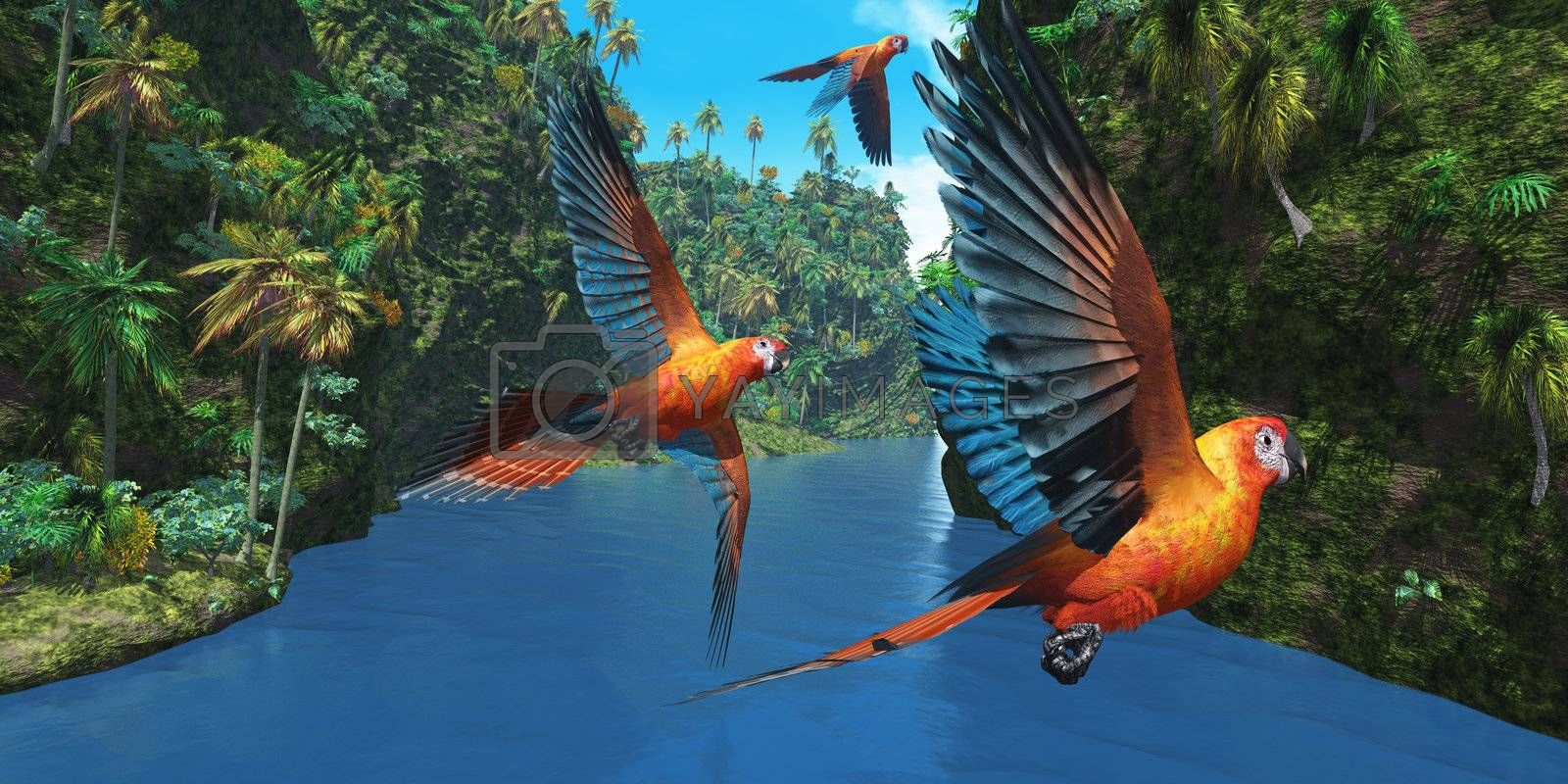Three amazing parrots fly over a jungle river in their brightly colored plumage.