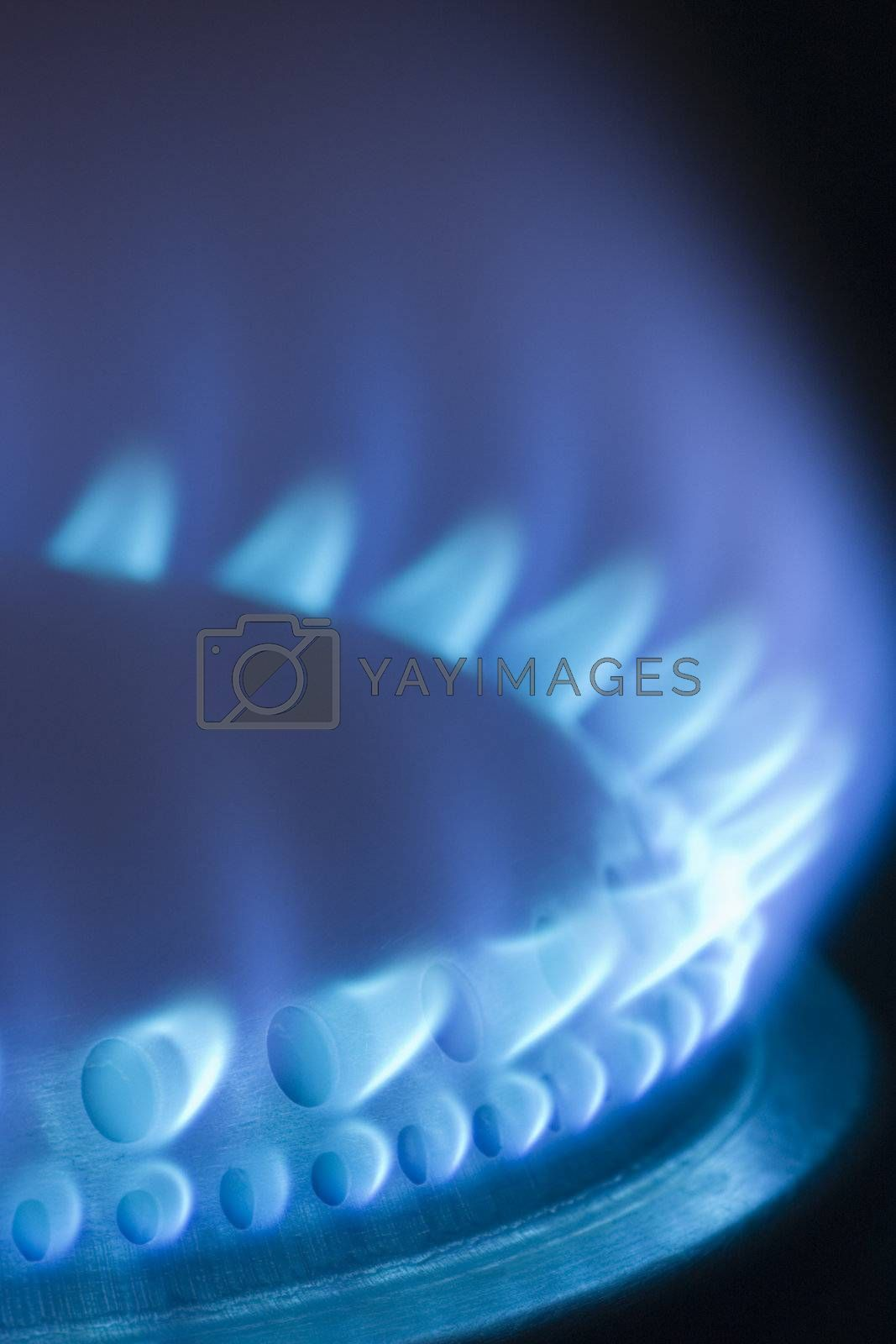 Blue flames of gas stove by ArtmannWitte