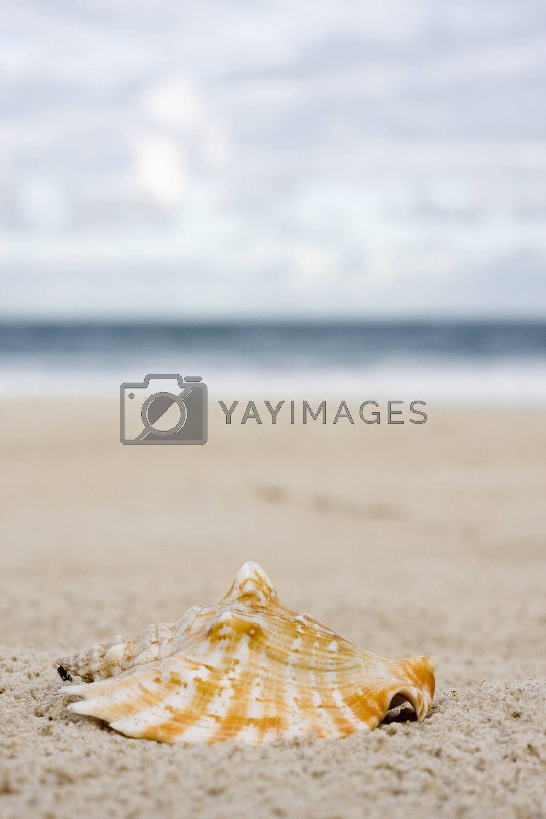 Shell on the beach by ArtmannWitte