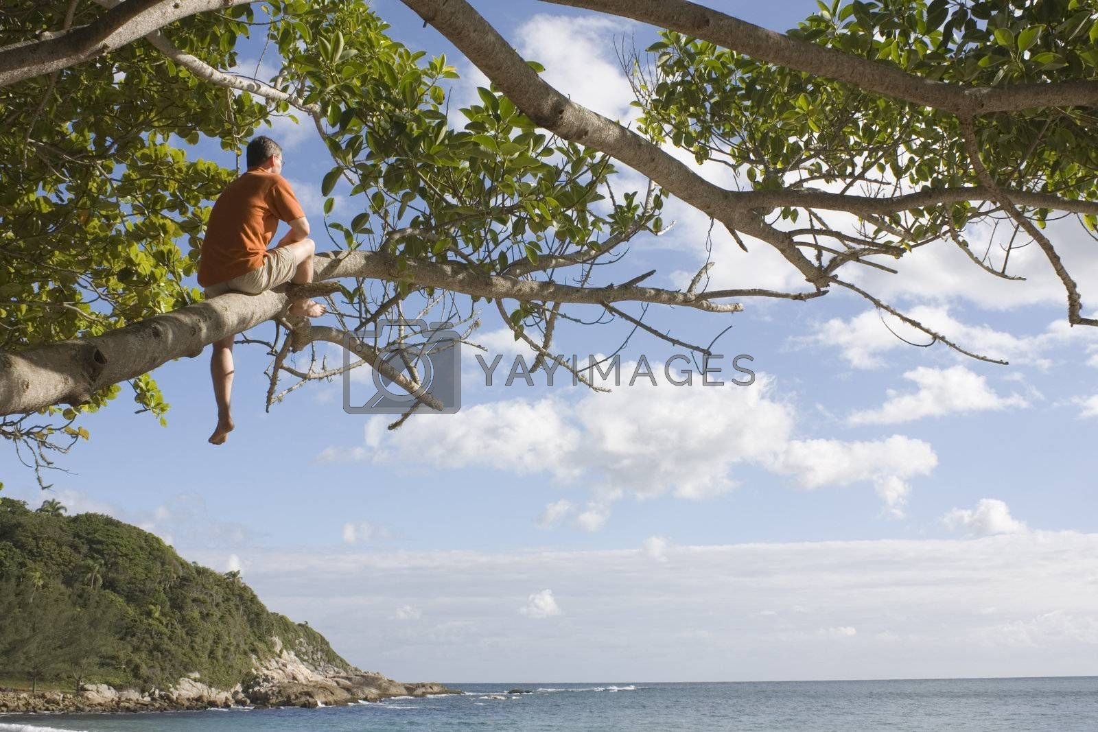 Man in a tree at the beach by ArtmannWitte