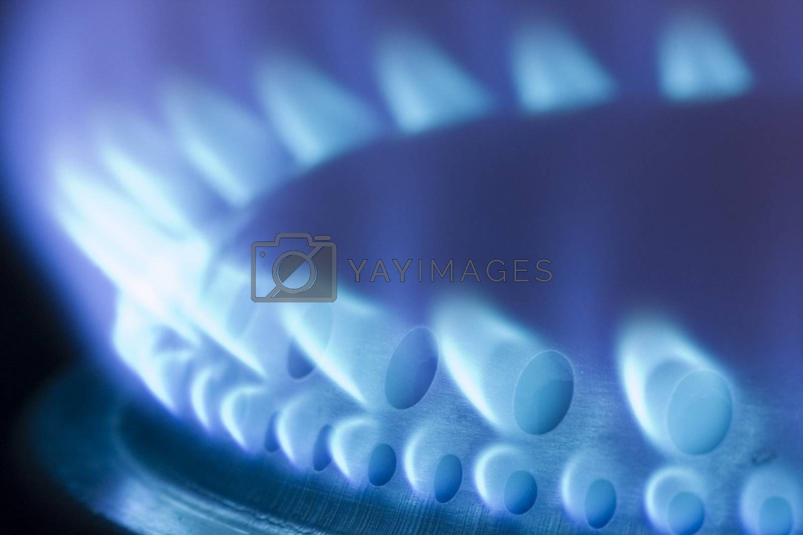 Blue flames of a gas stove by ArtmannWitte