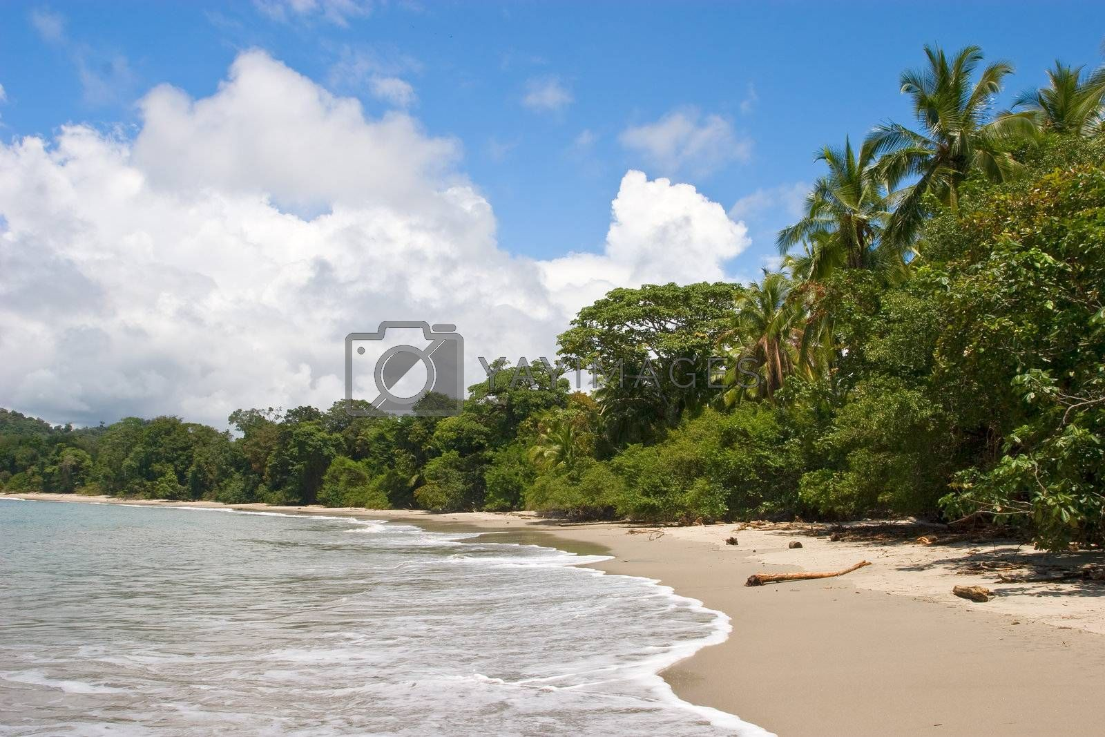 Tropical Beach by ajn