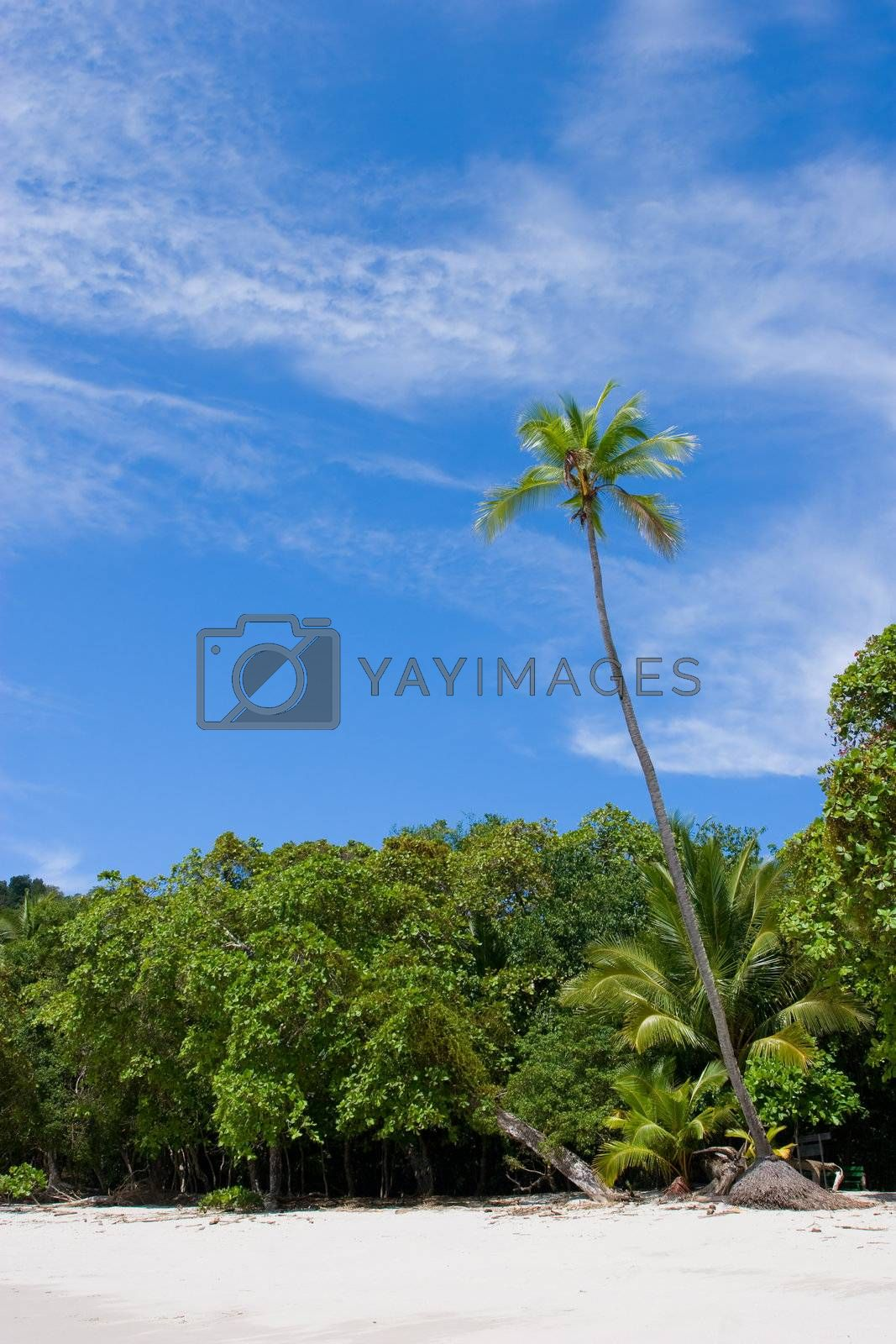Royalty free image of Palm Tree at the Beach by ajn