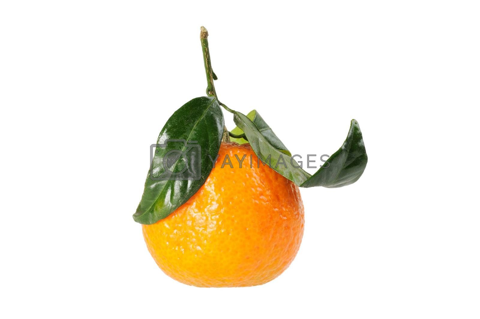Tangerine on branch. isolated on white background