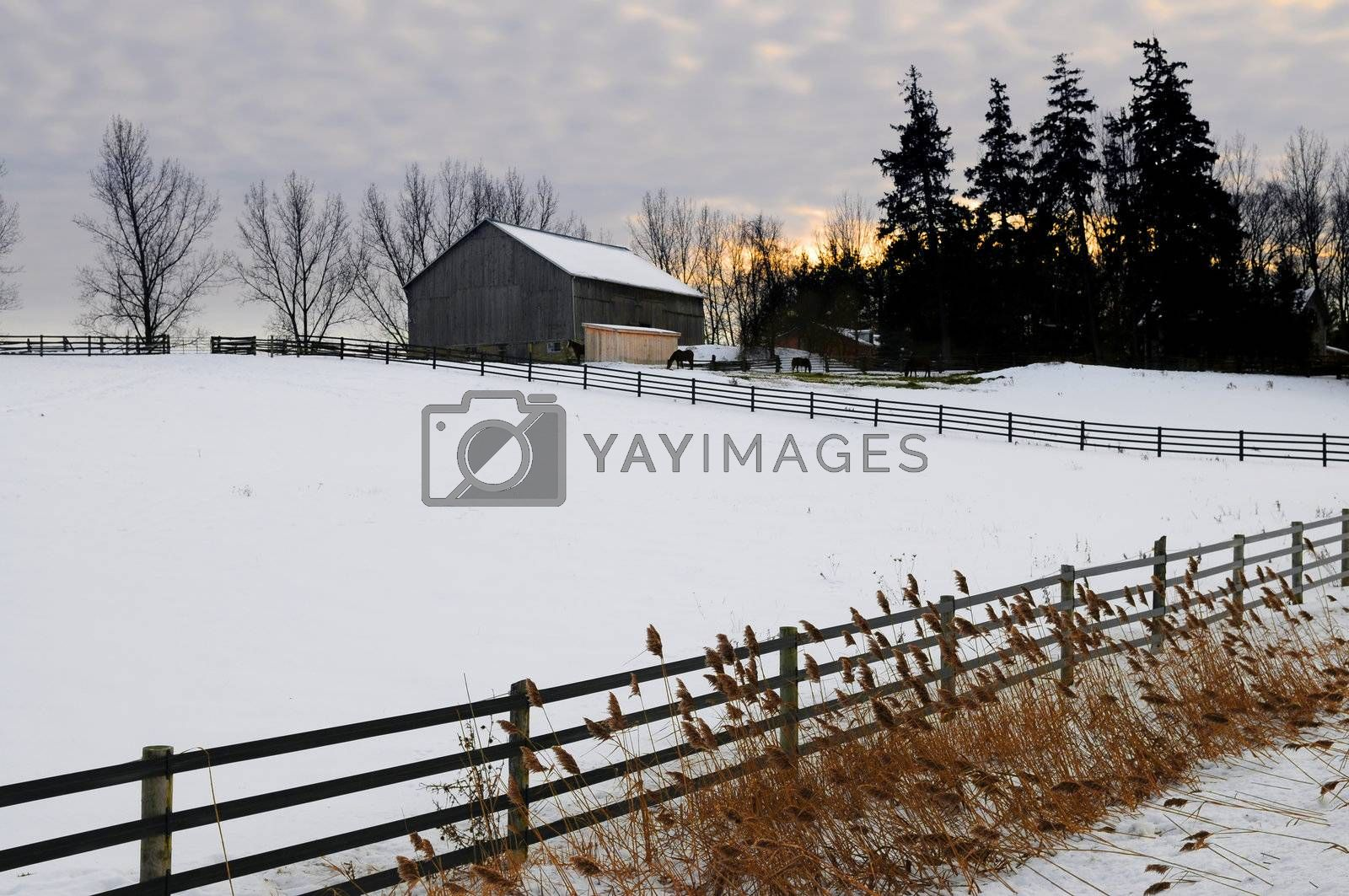 Farm with a barn and horses in winter at sunset
