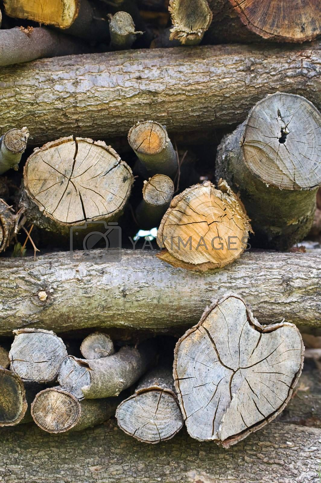 Close up shot of stacked logs