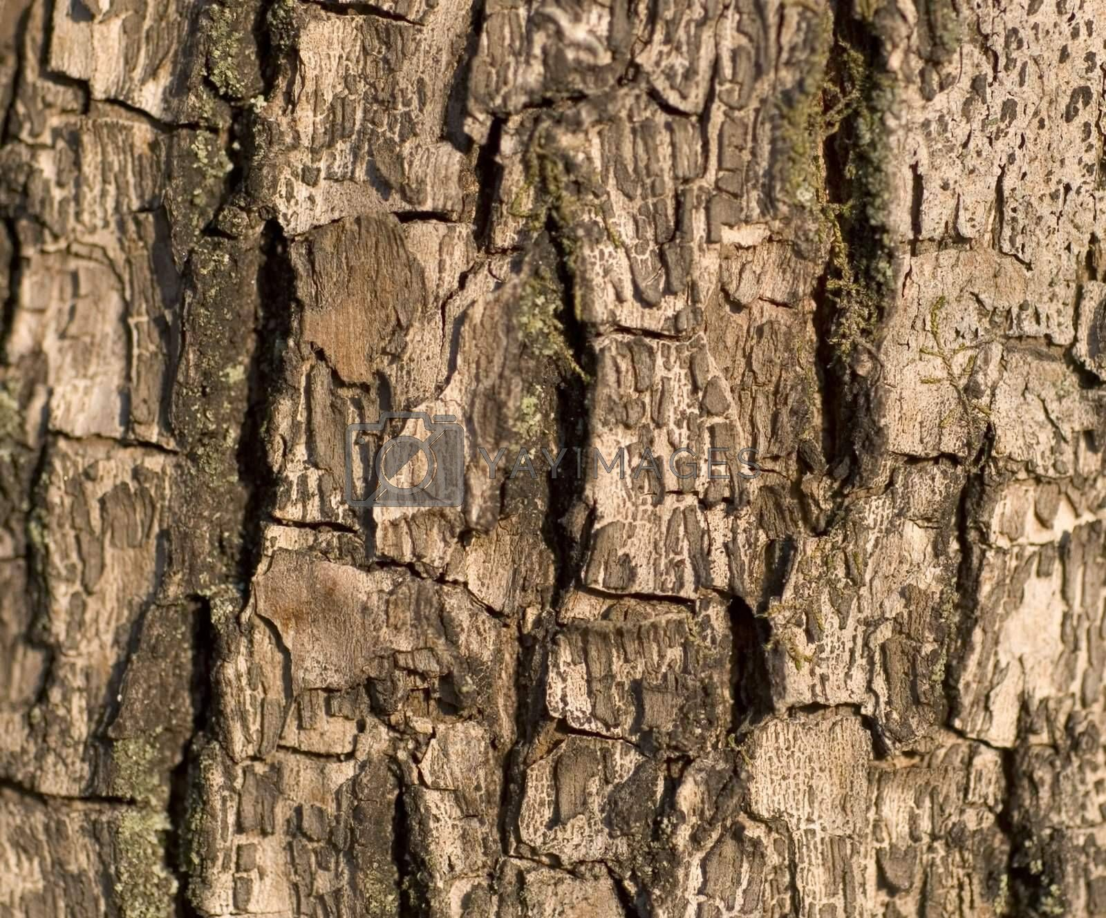 Textured close up of tree bark, brown with rough surface.