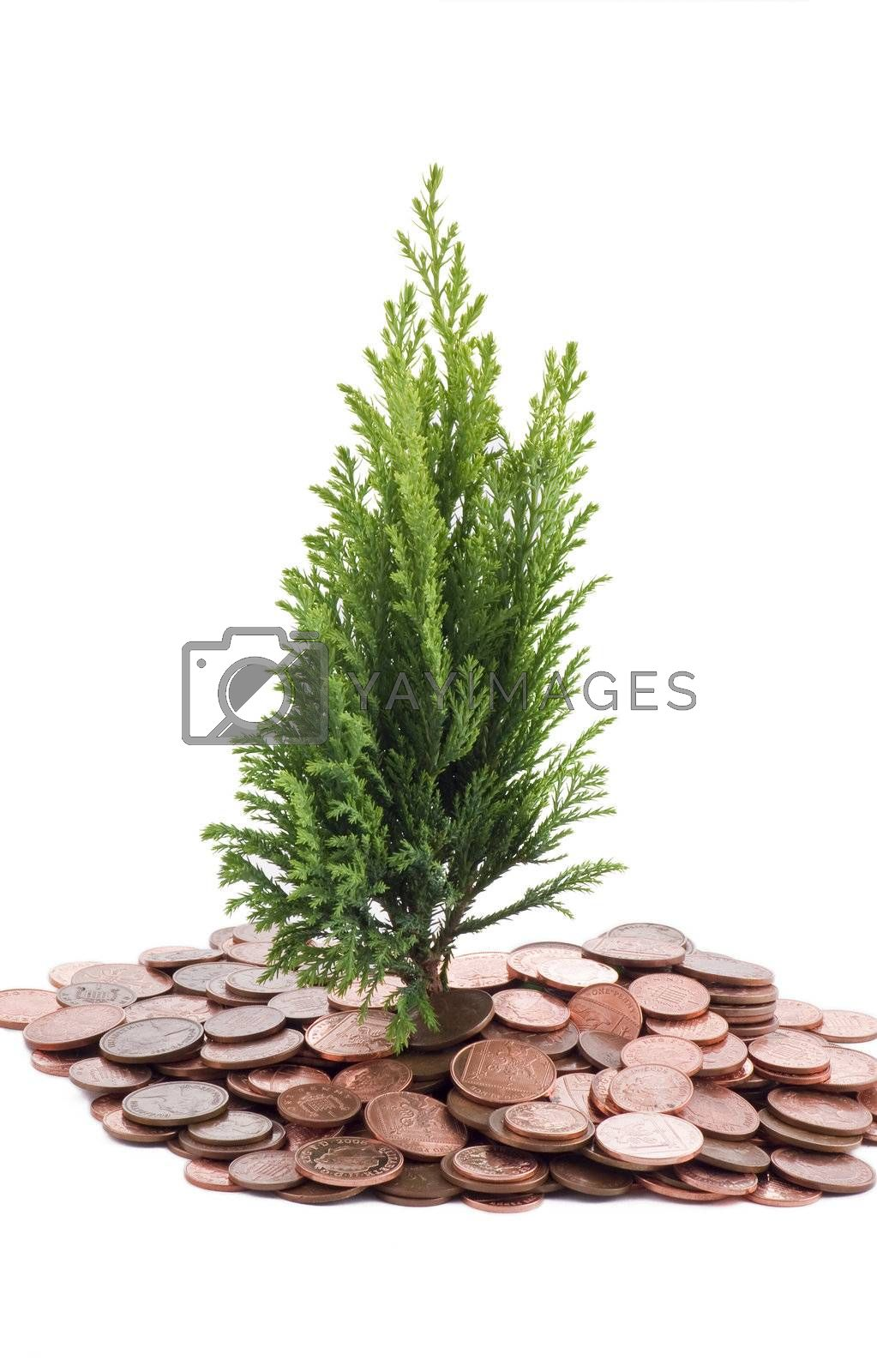 Coins and plant by caldix