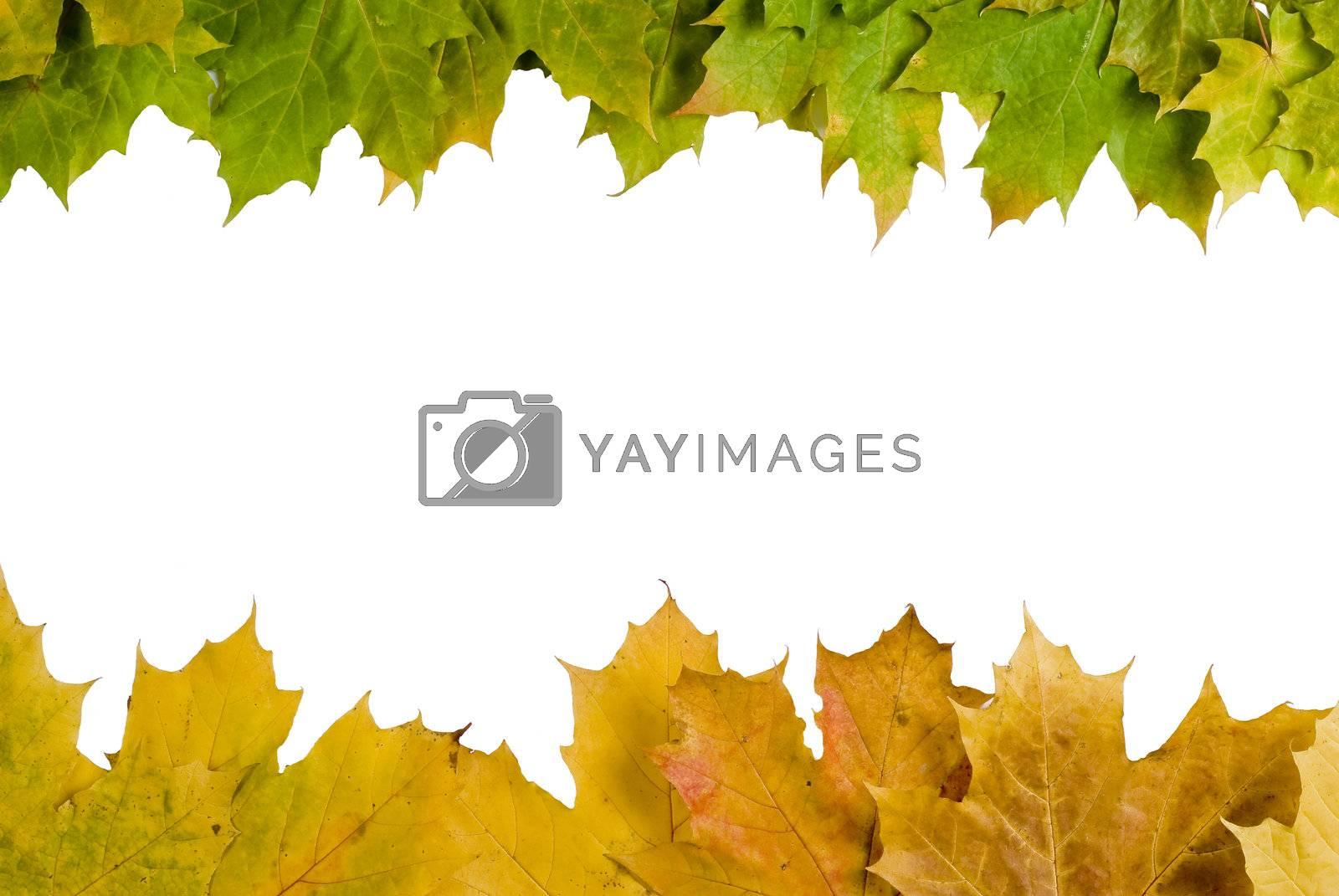 Autumn leaves border by caldix