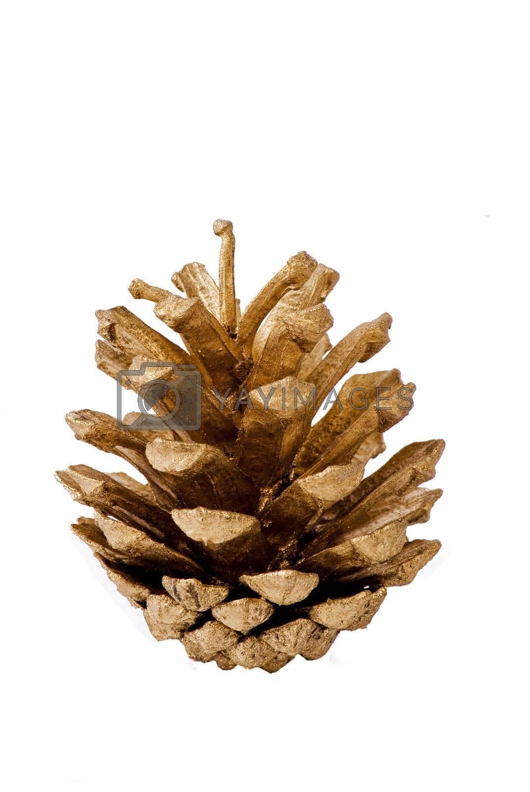 Pine cone by caldix