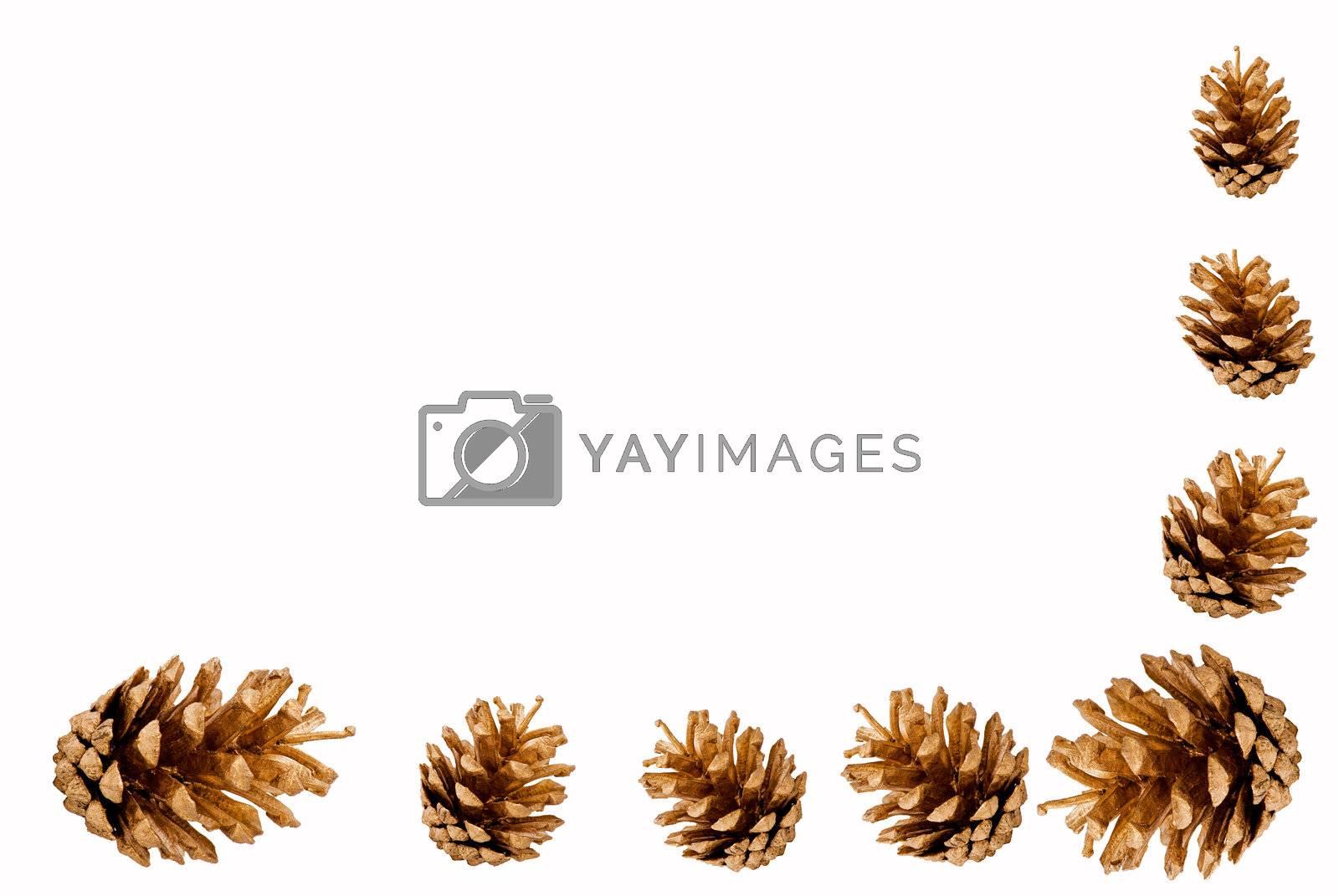 Pine cones border by caldix