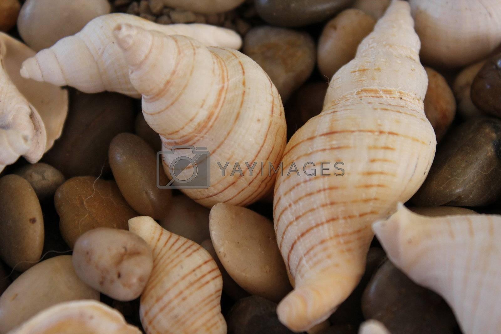 Seashell by Jannsel