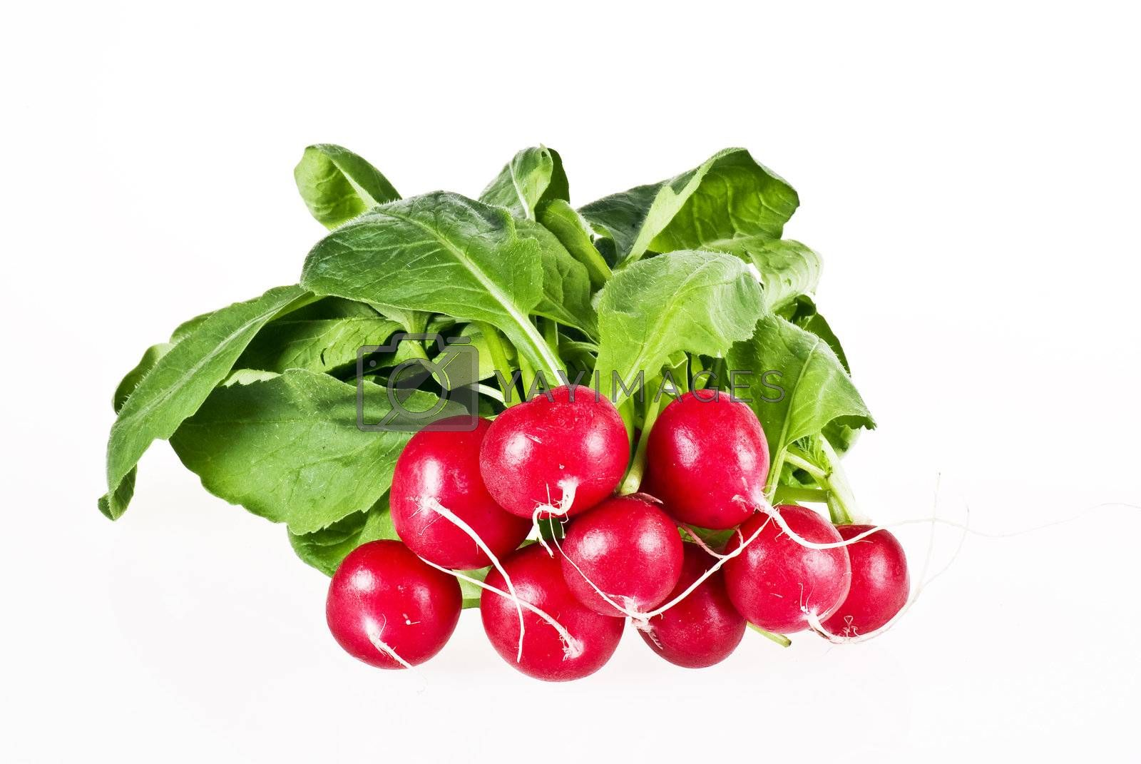 Fresh radish by caldix