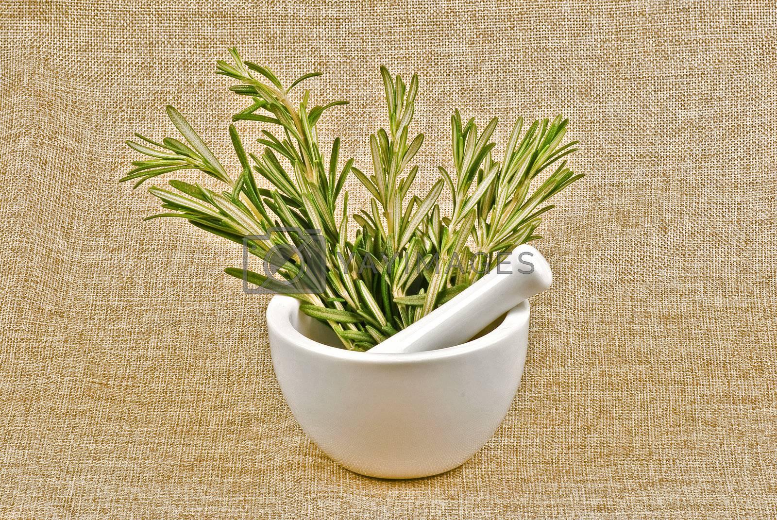 Rosemary by caldix