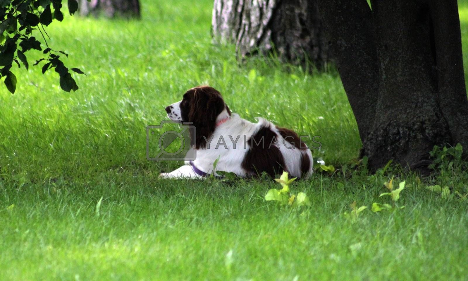 Dog taking well deserved rest under a tree
