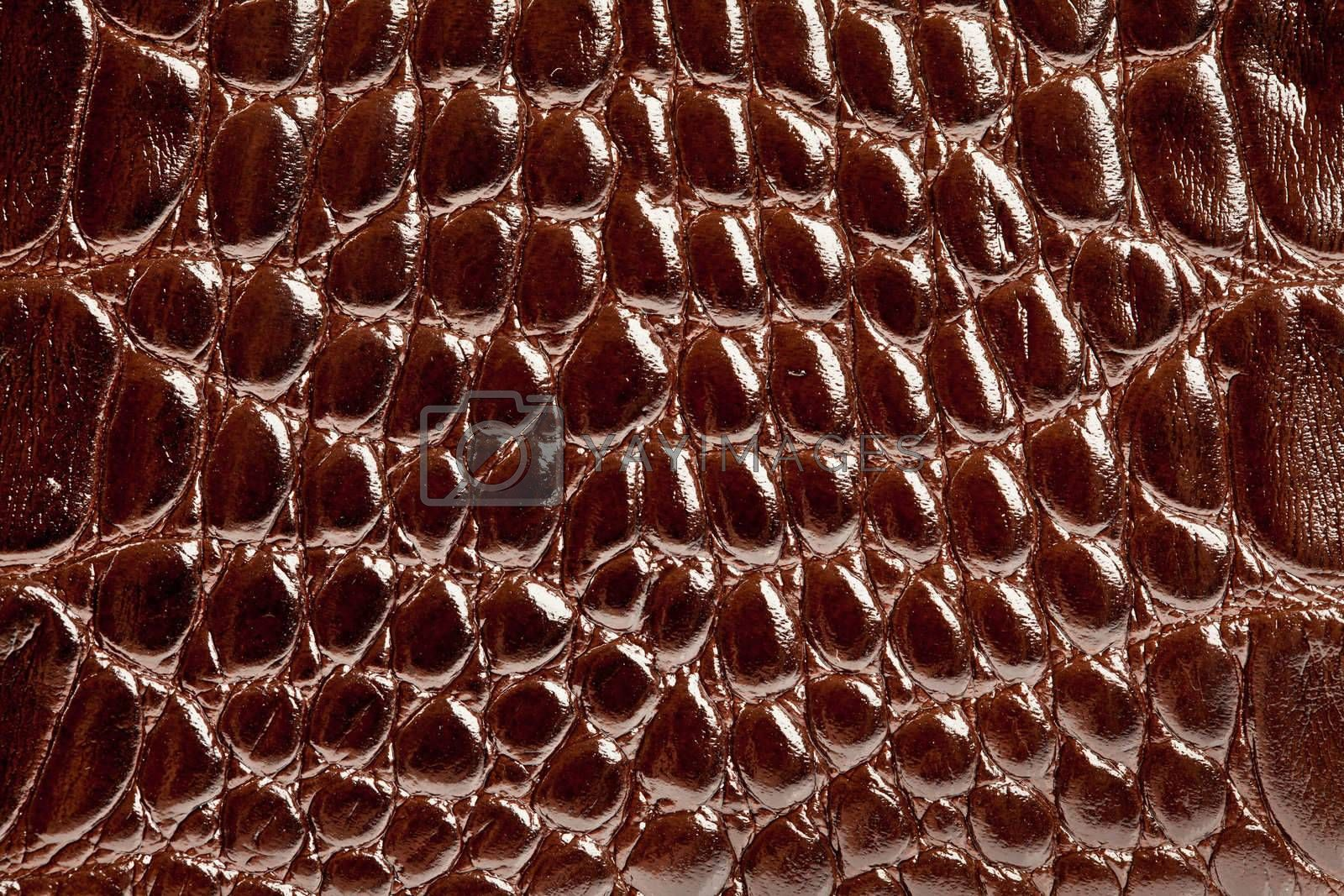 Background, texture of a skin of a crocodile close up