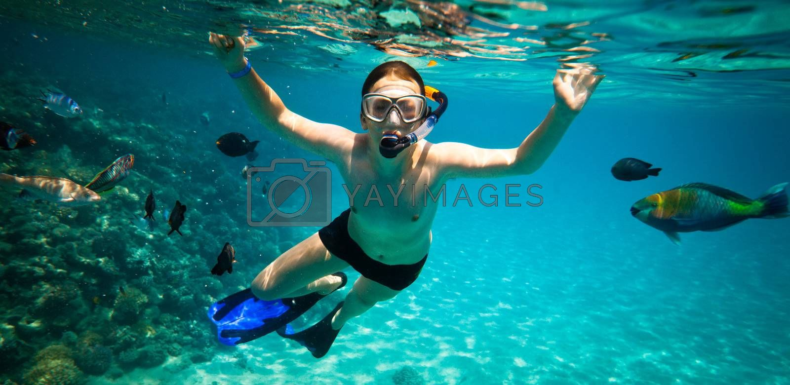 Snorkeler diving along the brain coral