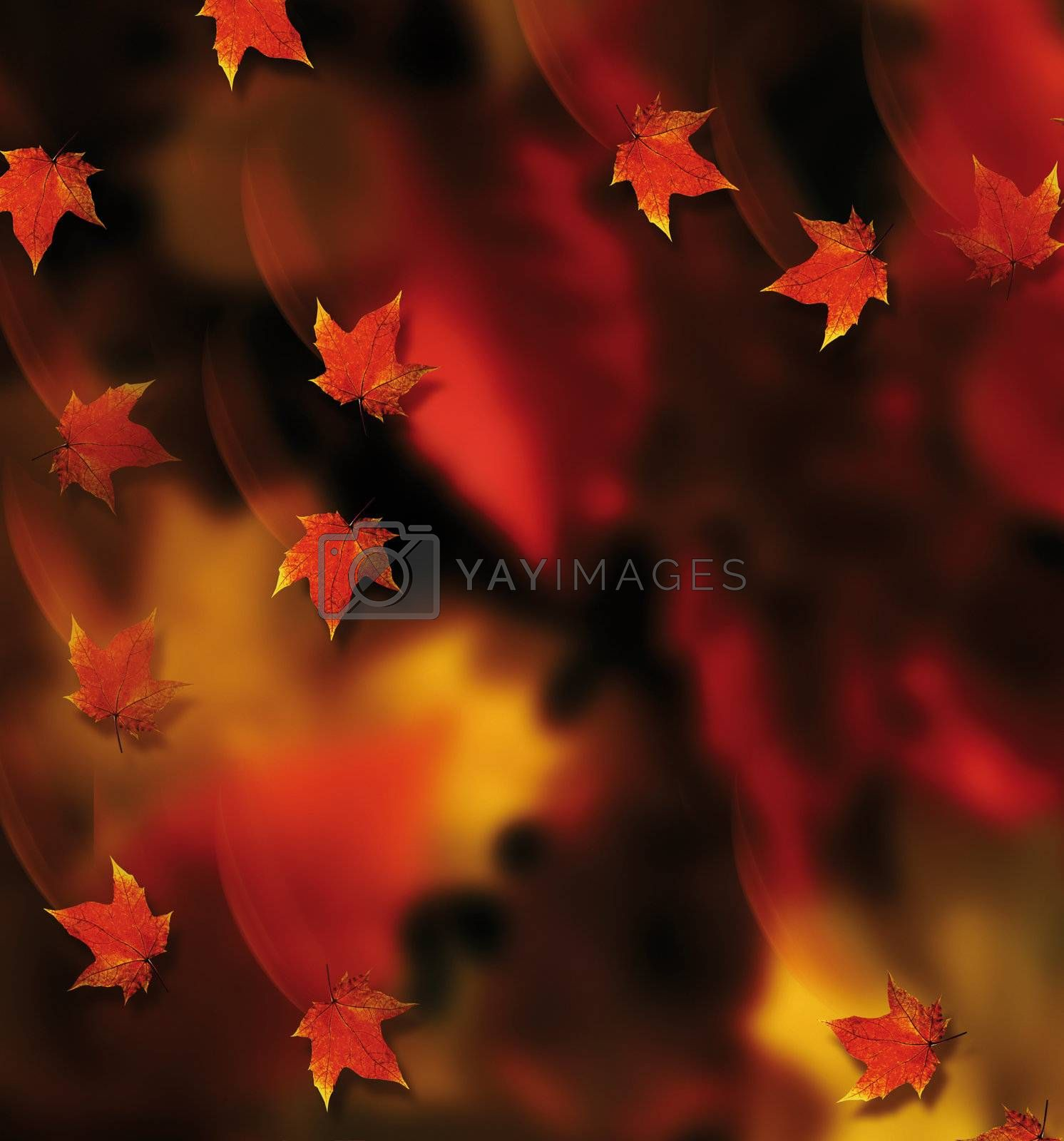 the fall - autumn red leaves with wind