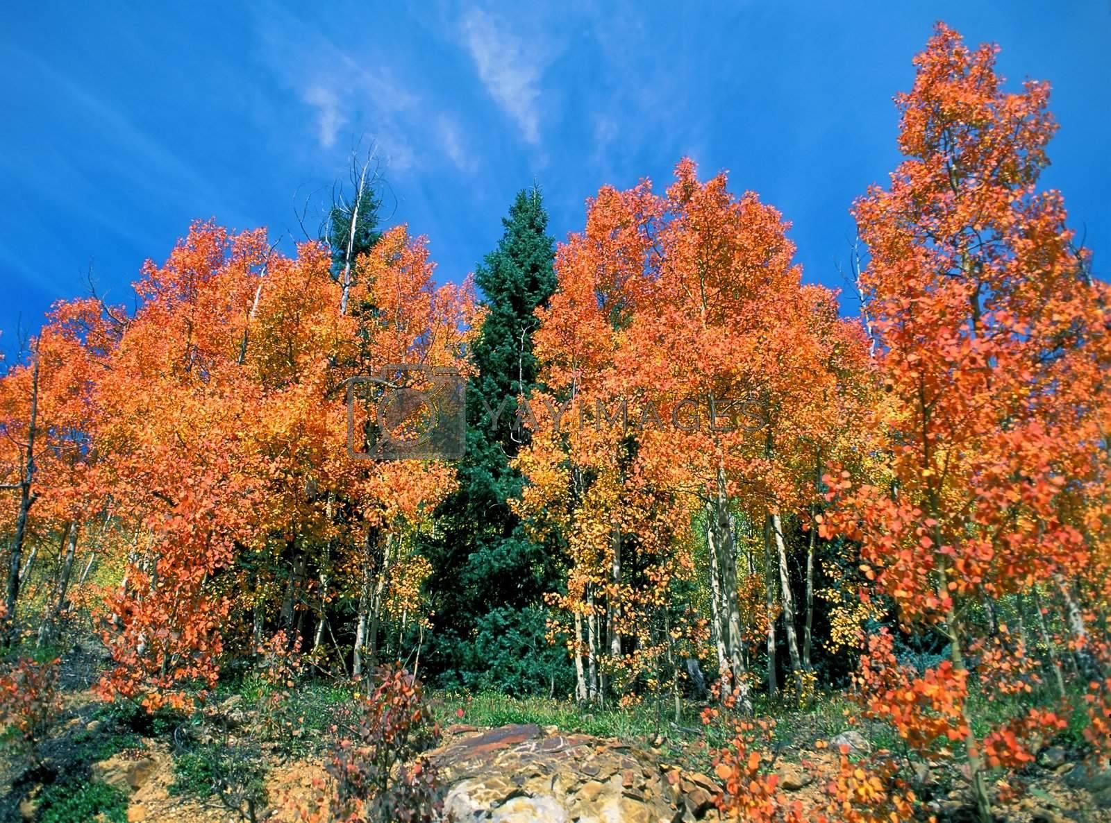 Fall scene in Colorado.