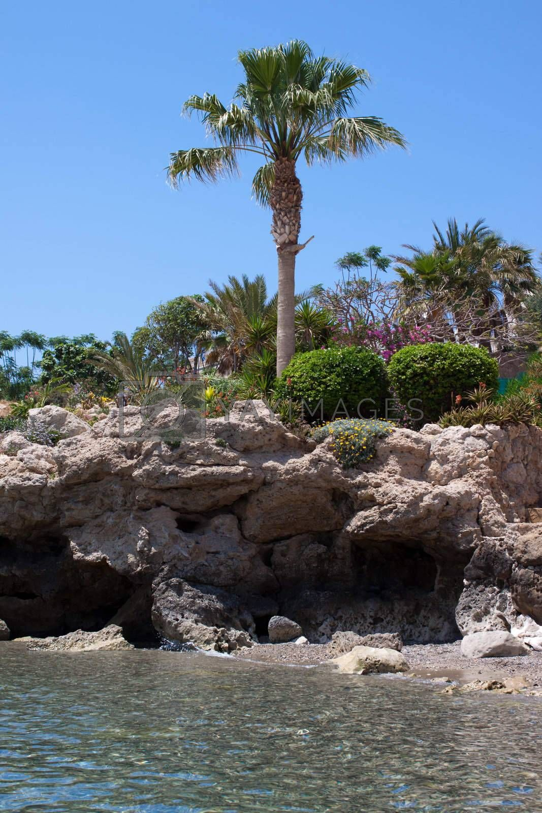 palm trees and flowers on a rocky seashore