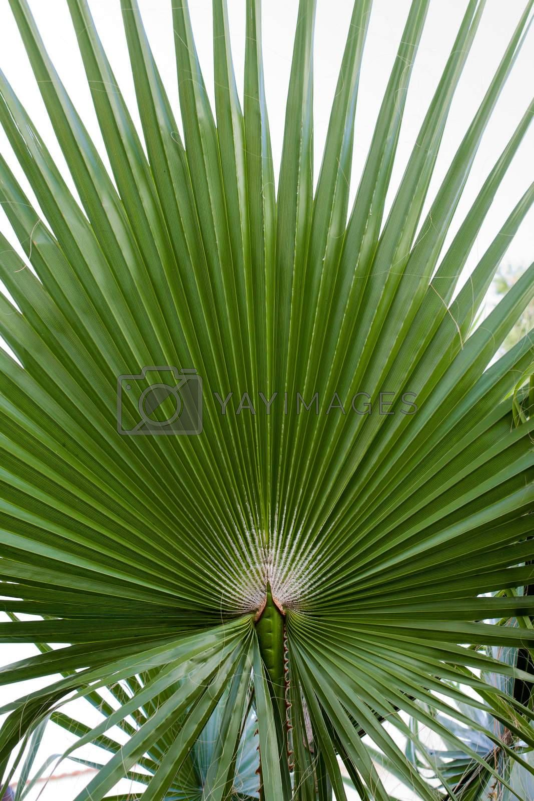 photo of green palm branches into the frame