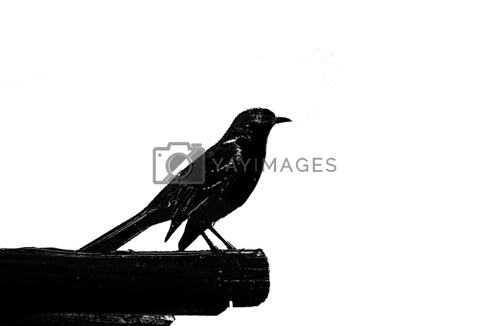 Silhouette of a finch perched on a rafter