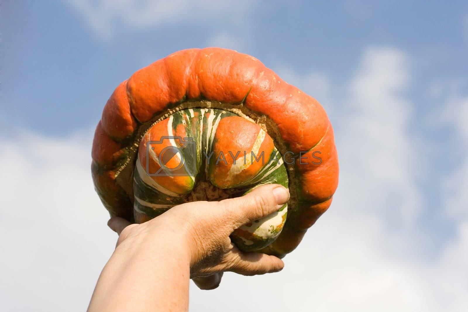 autumn vegetables clouds fall sky pumpkin hand