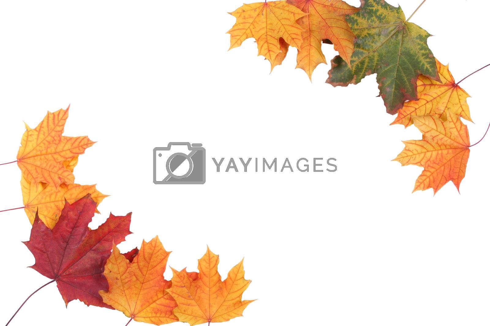 decoration form autumn textured leaf colored frame