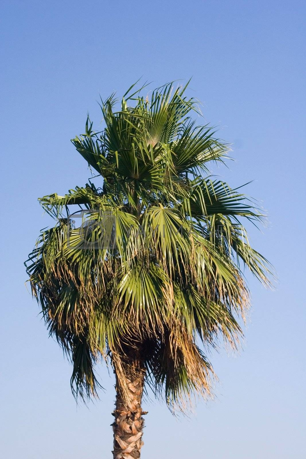 sky palm tree blue leaves tropical light relax