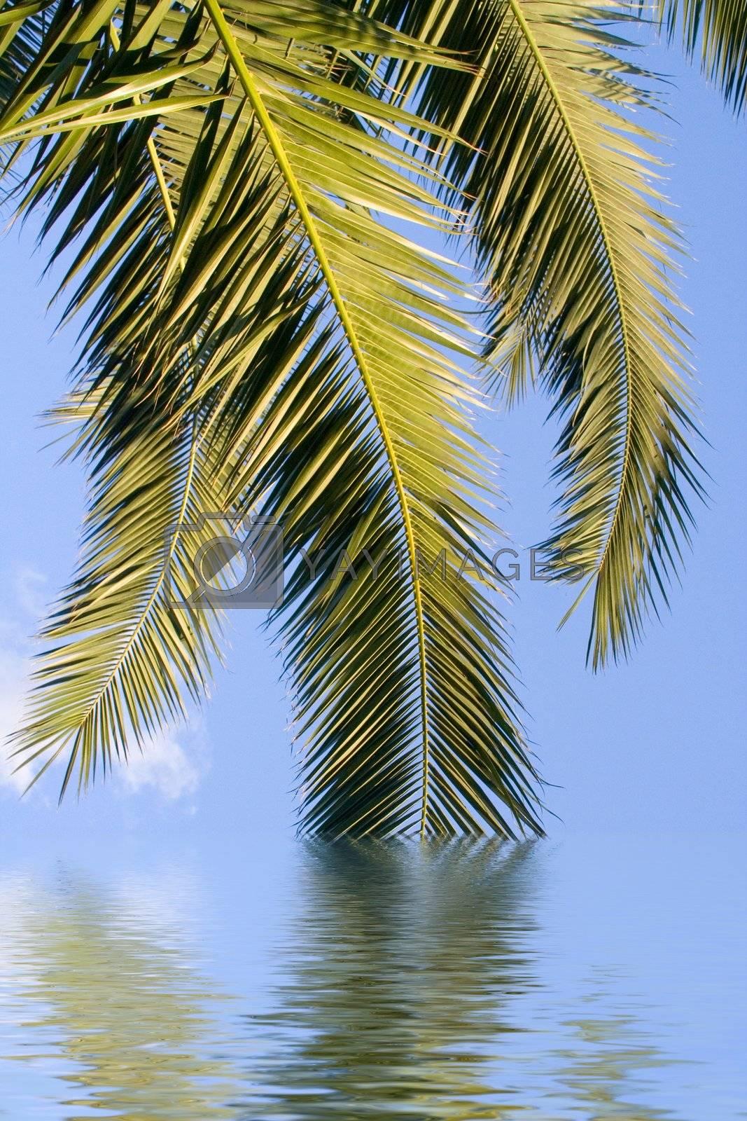 leaves sky water sunlight tree waves green blue