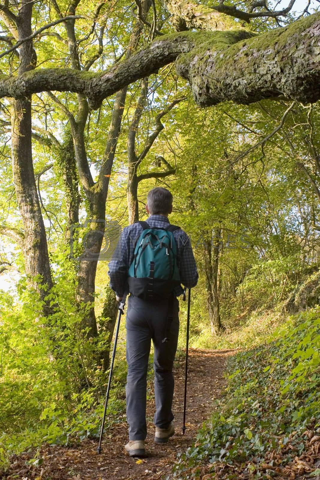 Hiker with rucksack in a green forest.