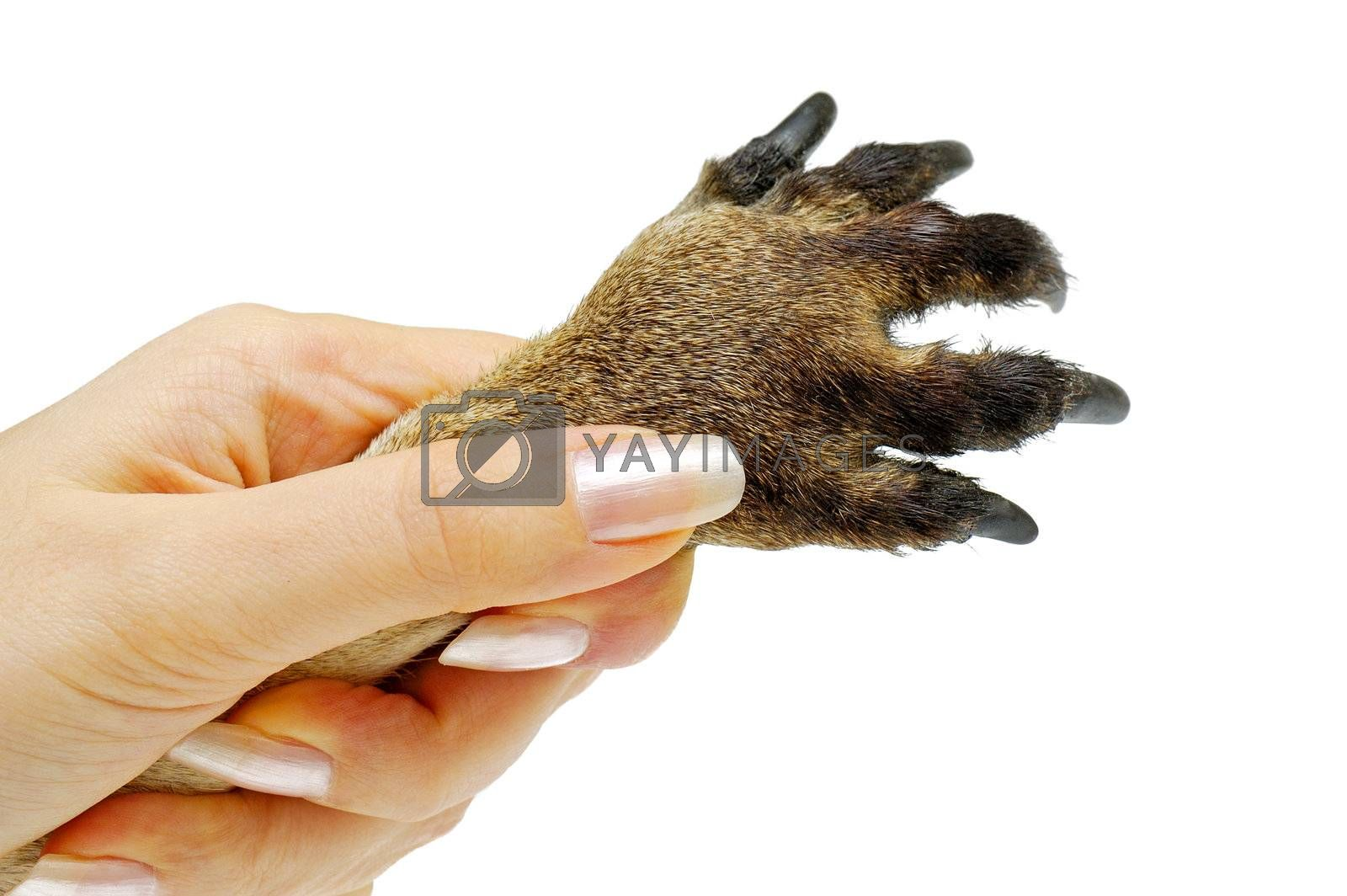 Human hand holding animal's paw