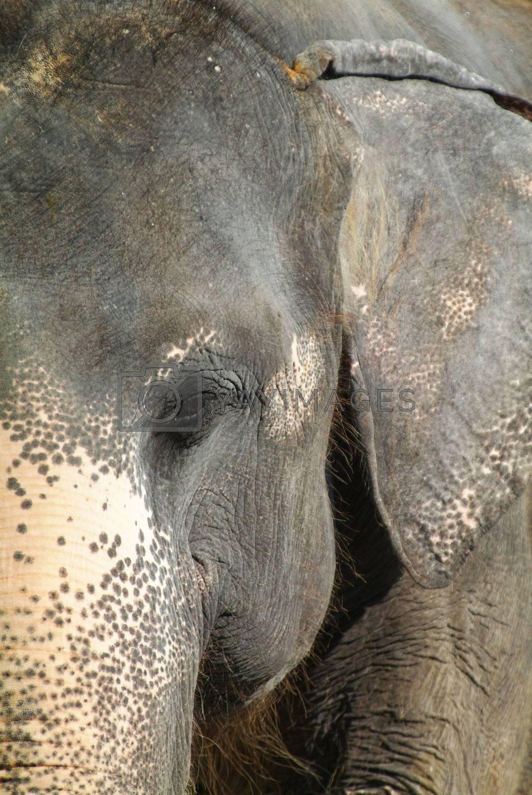 Detail of elephant by epixx
