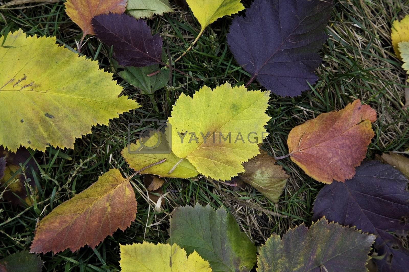 focus point on the center, autumn concept