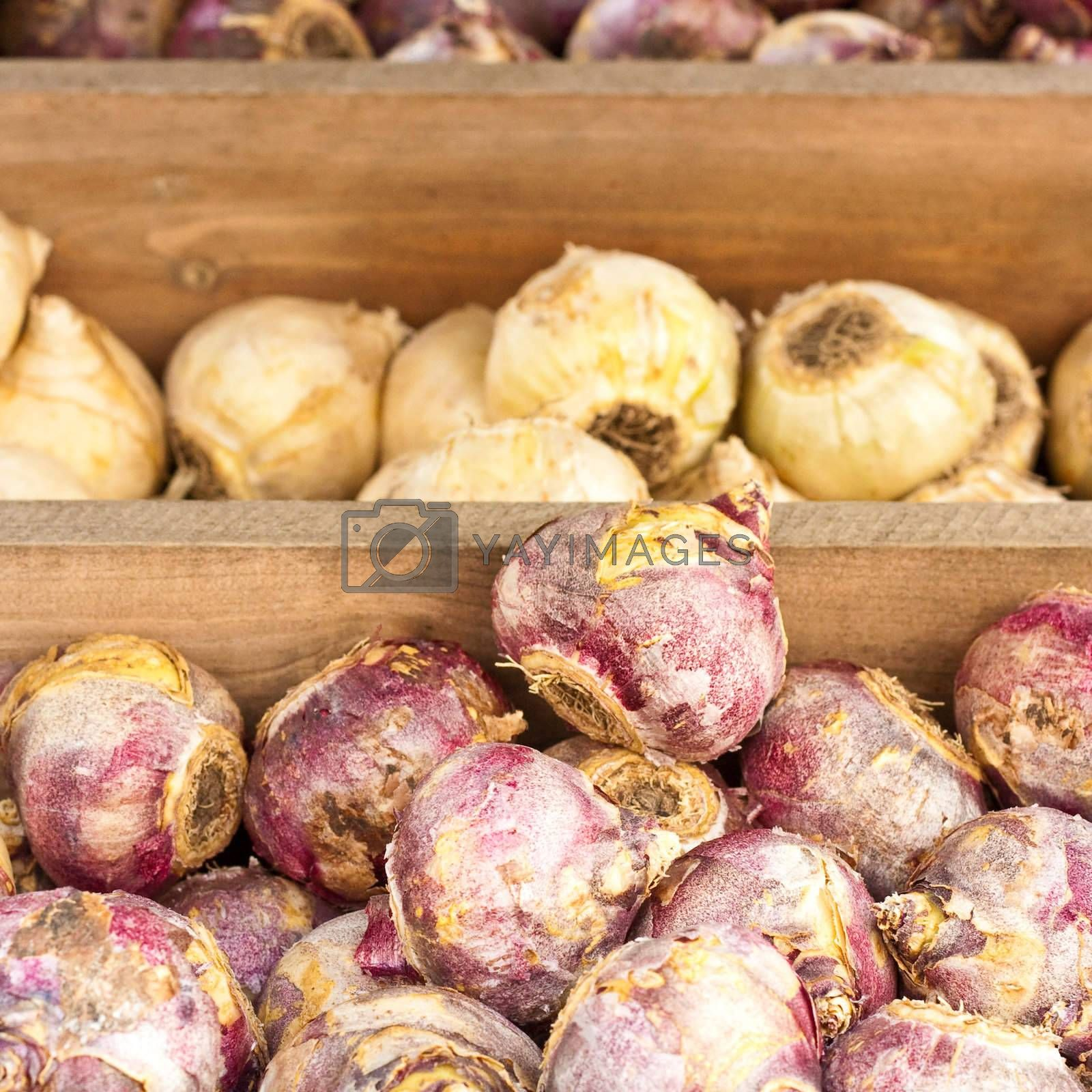 various spring flower bulbs for sale in a wooden crate