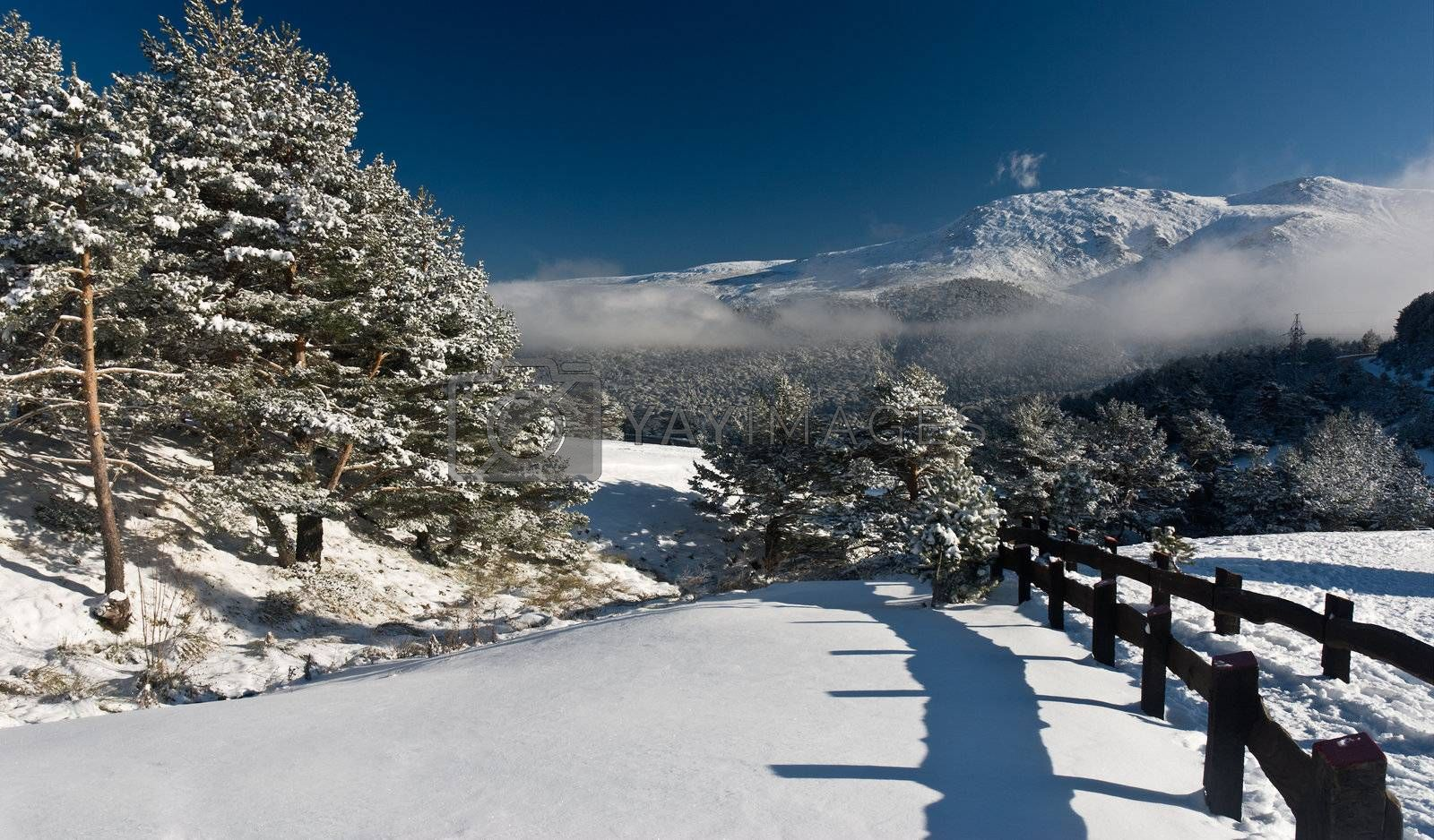 winter landscape snow tree seasonal mountain