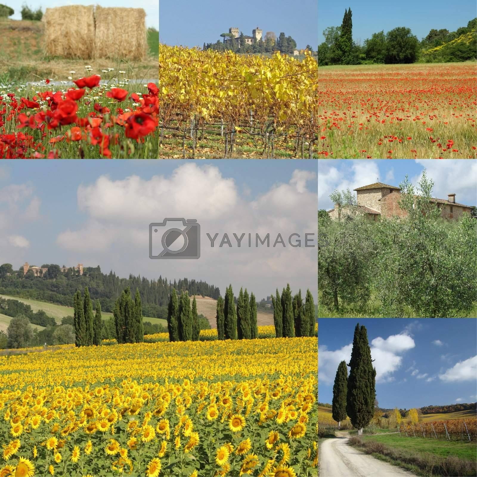collage with beautiful tuscan countryside, Italy,Europe
