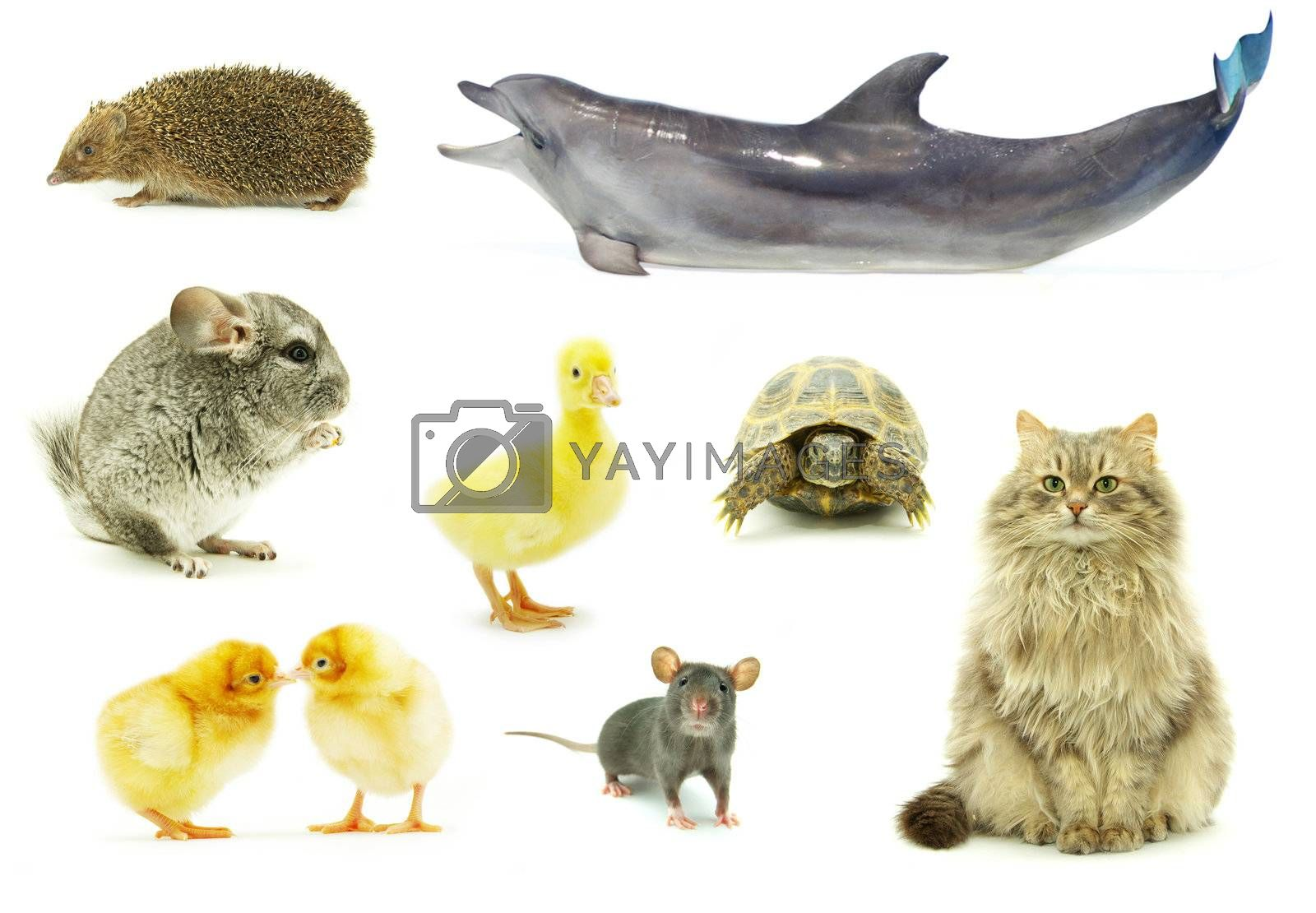 collection animal isolated on white background