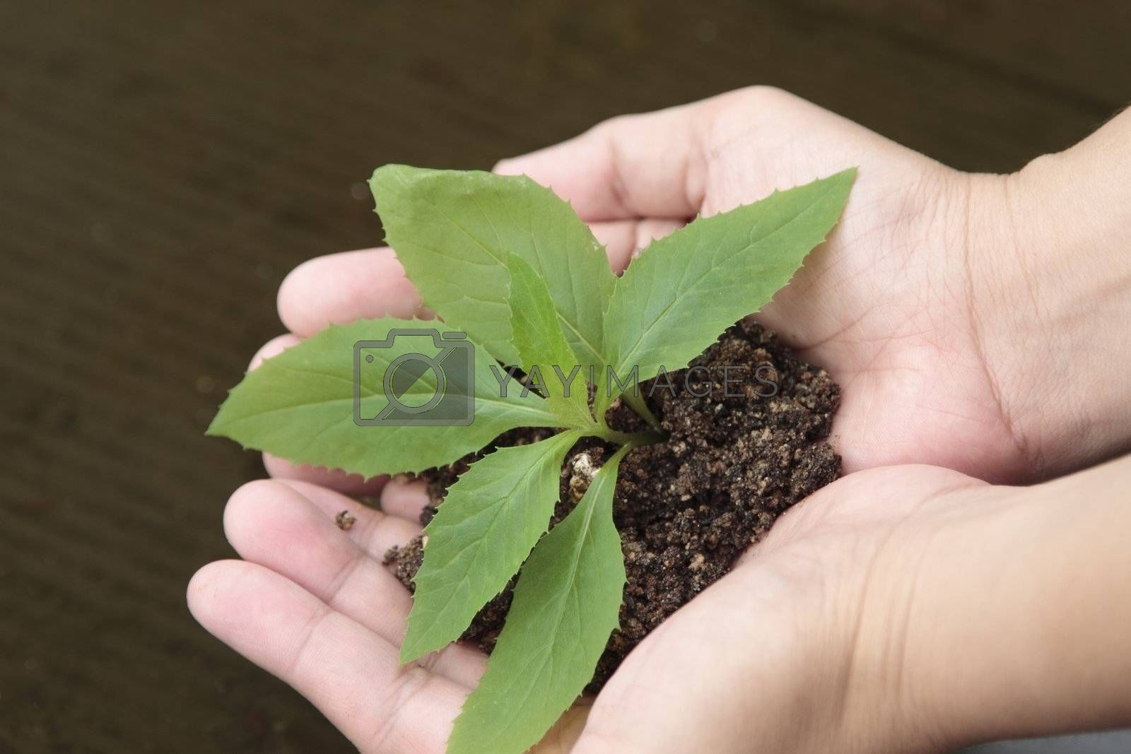 Female hands with a plant in a brown background.