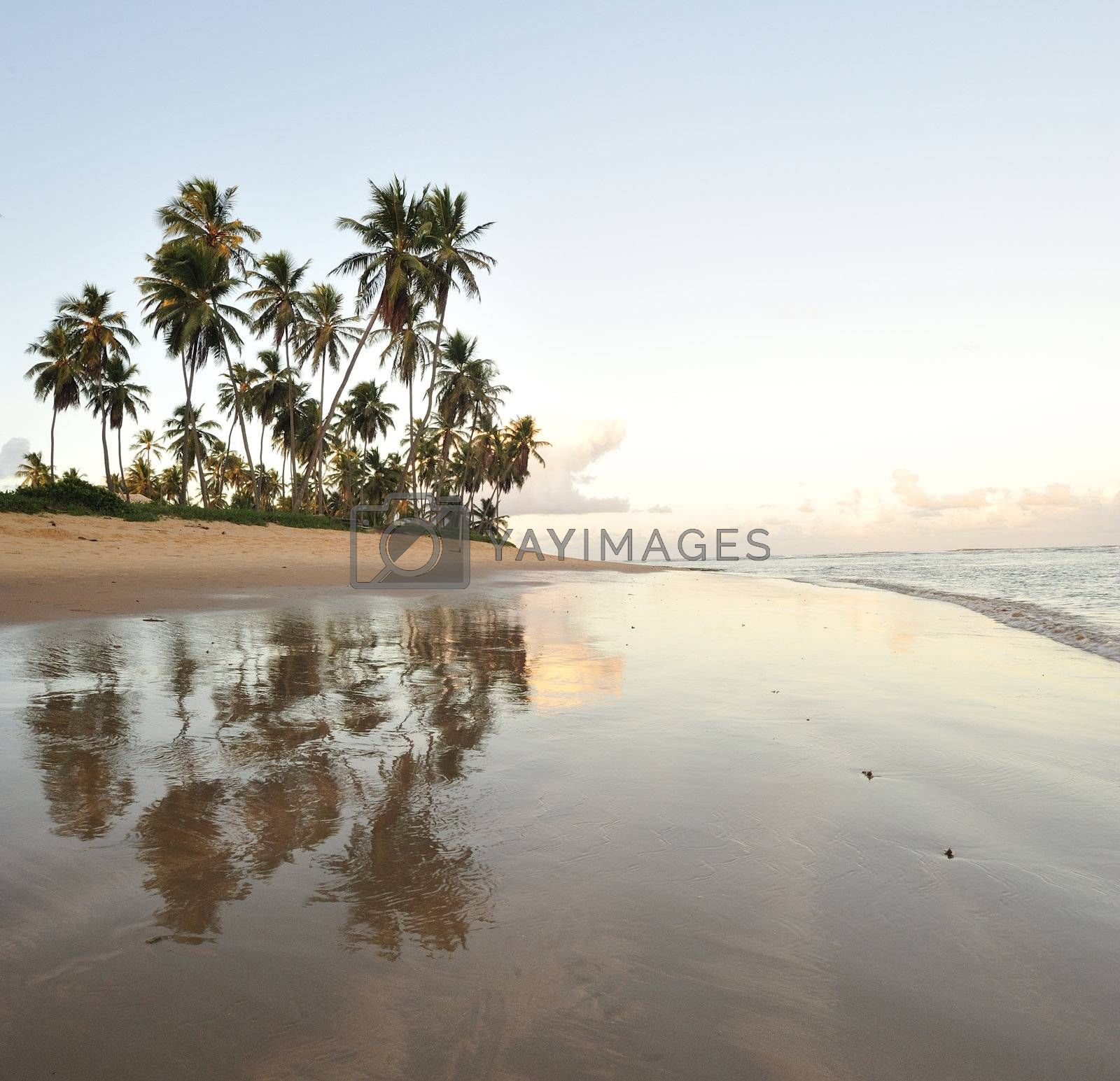 Paradise beach by swimnews
