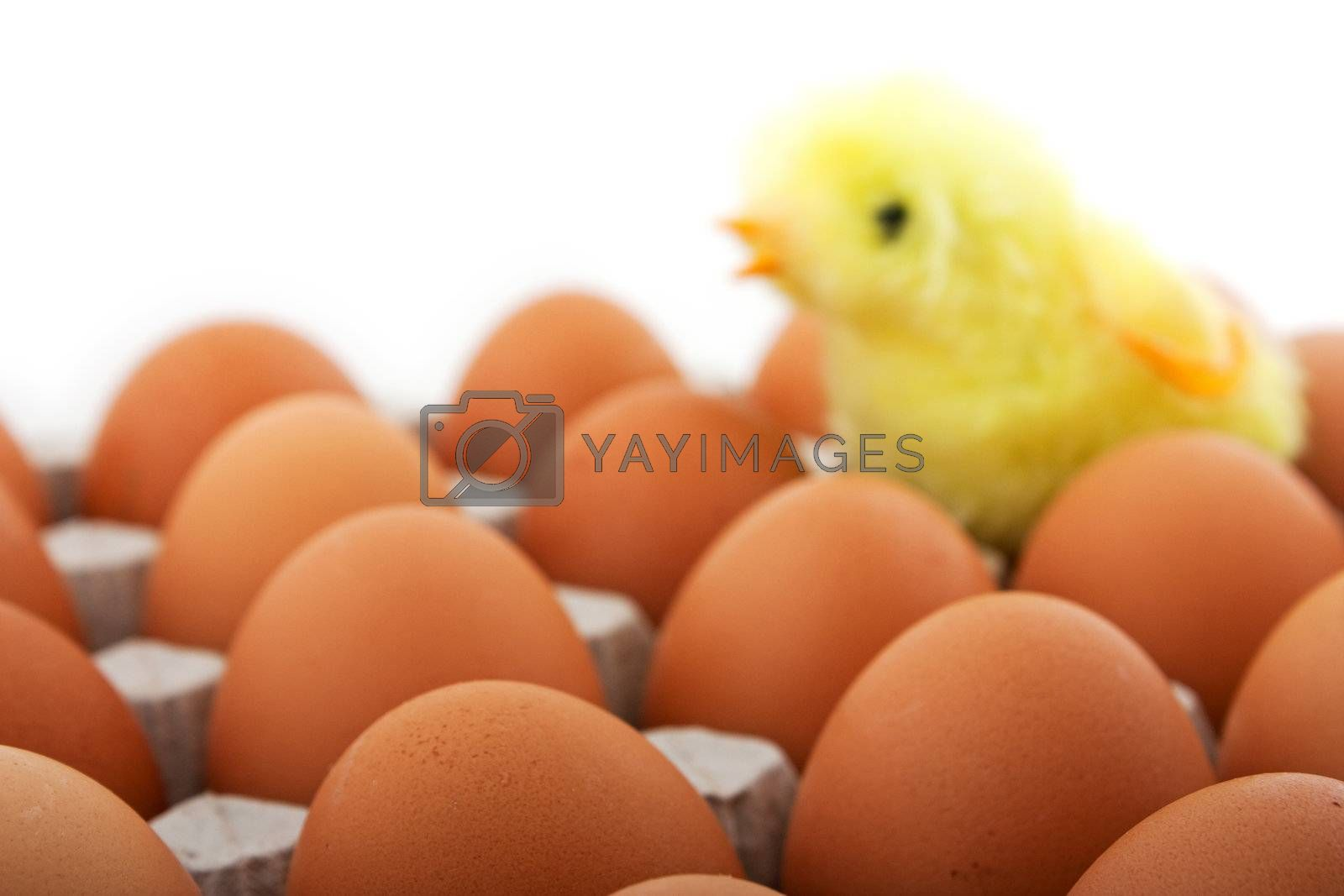Chicken egg food carton package white isolated