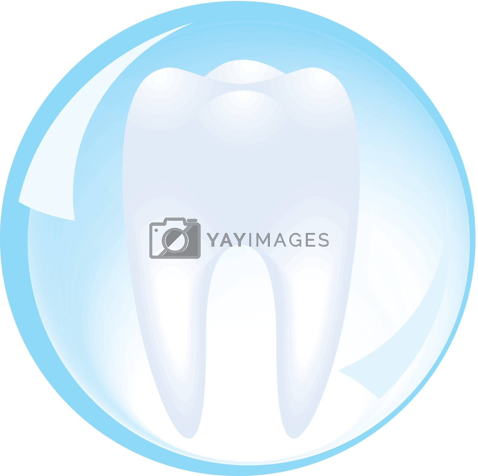 tooth is protected by a glass sphere of dentistry