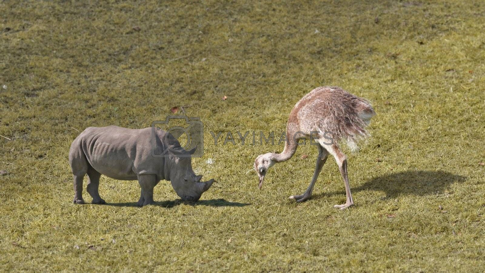 Giant animals grazing on grass.