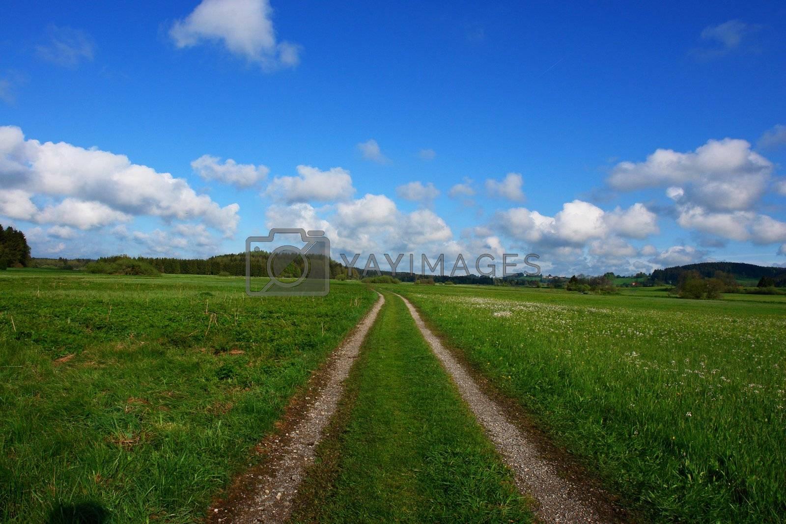 a path through a summer landscape wide