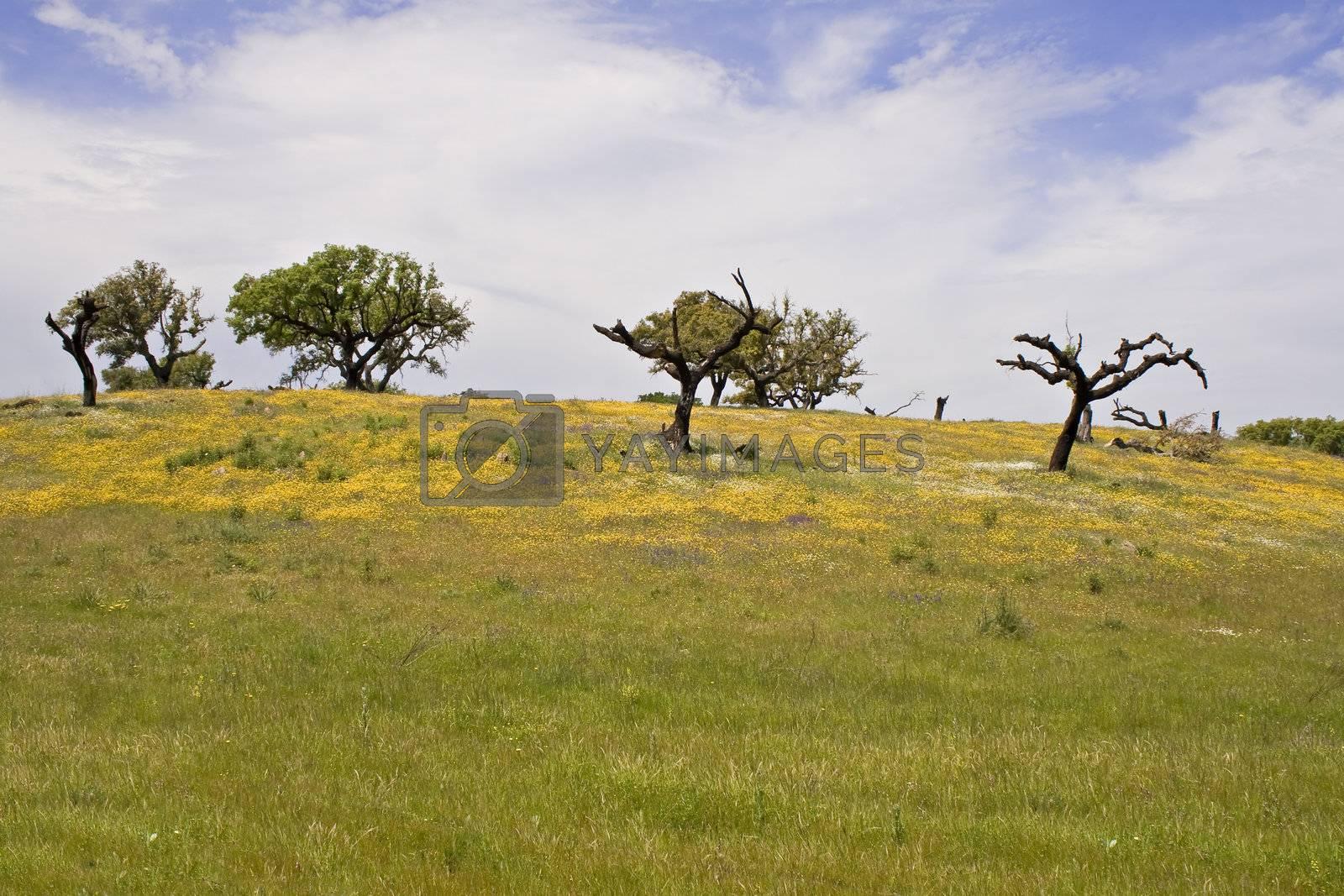 Spring landscape in Alentejo - Portugal
