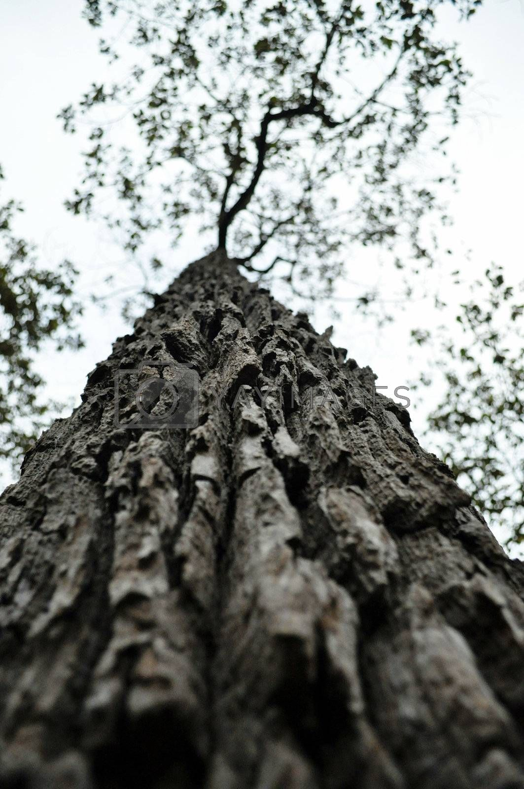 Bark is the outermost layers of stems and roots of woody plants.